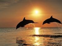"""Картина стразами """"Игры дельфинов"""" AJ-1089"""