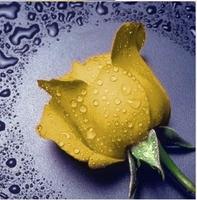 """Картина стразами """"Желтая роза"""" AJ-18"""